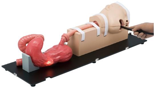 Symulator endoskopii przełyku żołądka i dwunastnicy